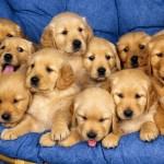 Fondos de Pantalla de Animales